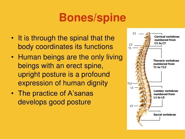 Bones/spine