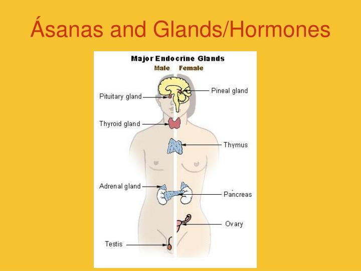 Ásanas and Glands/Hormones