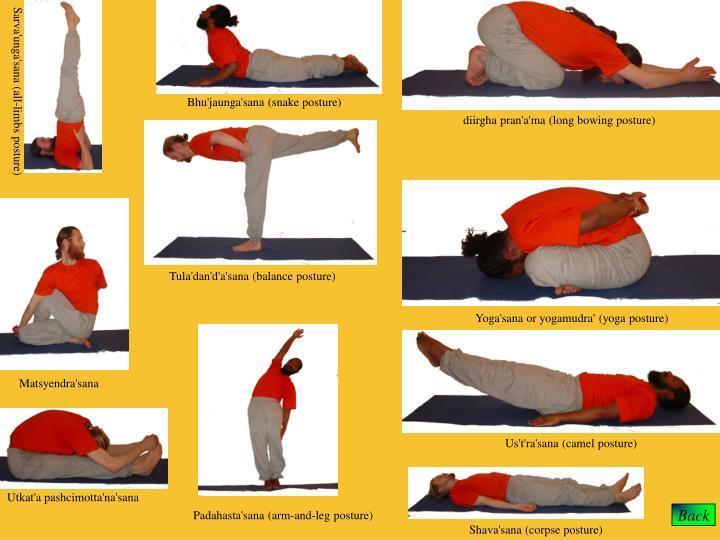 Bhu'jaunga'sana (snake posture)