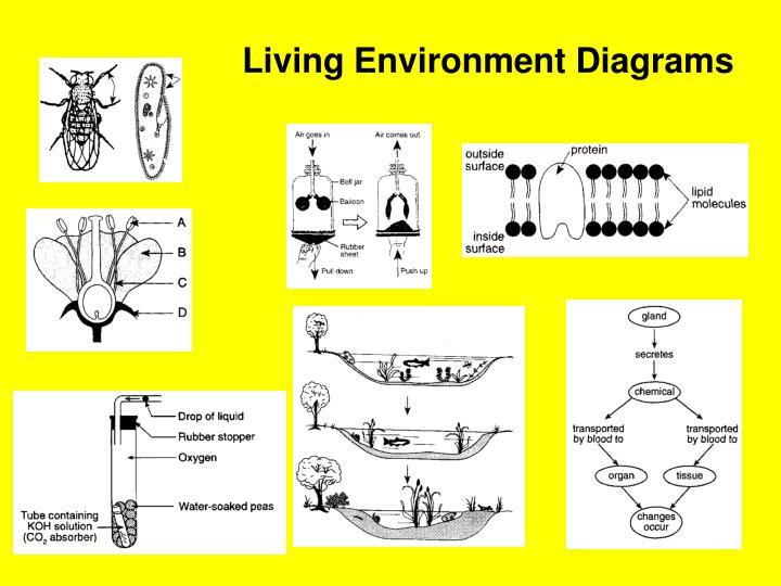 Living Environment Diagrams