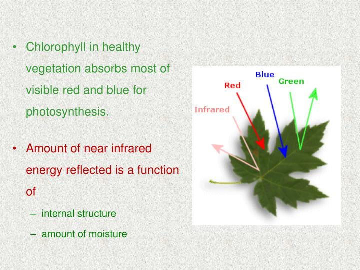 Chlorophyll in healthy vegetation absorbs most of visible red and blue for photosynthesis.