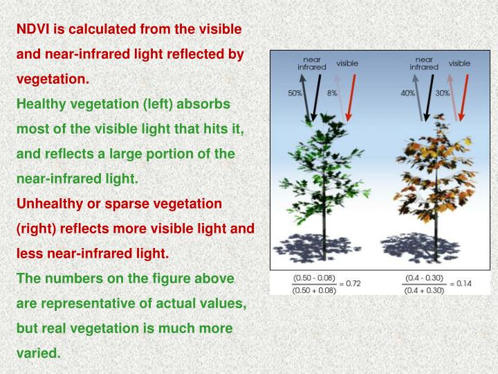 NDVI is calculated from the visible and near-infrared light reflected by vegetation.