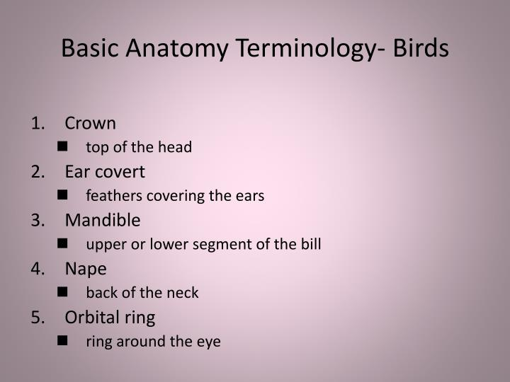 Basic Anatomy Terminology- Birds