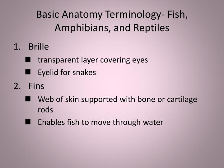 Basic Anatomy Terminology- Fish, Amphibians, and Reptiles