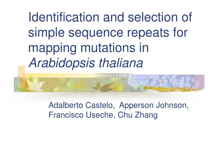 Identification and selection of simple sequence repeats for mapping mutations in