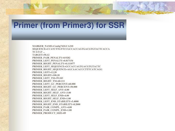 Primer (from Primer3) for SSR