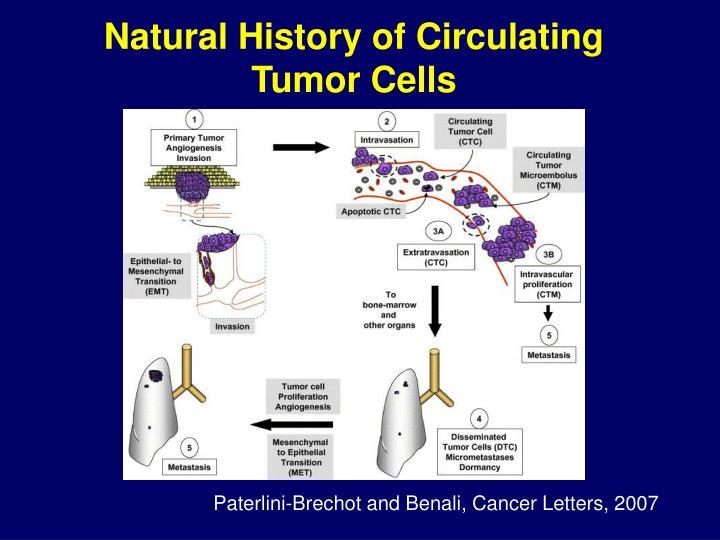 Natural History of Circulating Tumor Cells