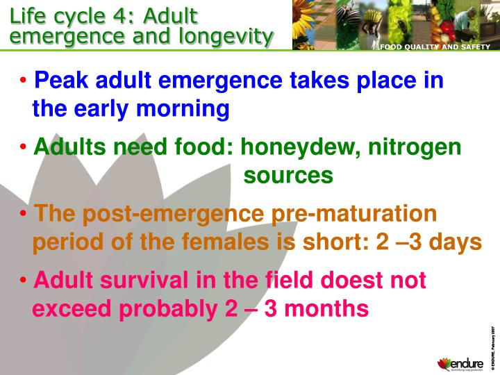 Life cycle 4: Adult emergence and longevity