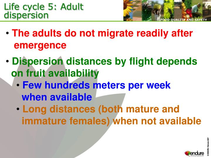 Life cycle 5: Adult dispersion