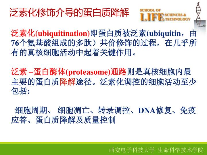 泛素化修饰介导的蛋白质降解