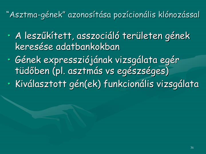 """""""Asztma-gének"""" azonosítása pozícionális klónozással"""