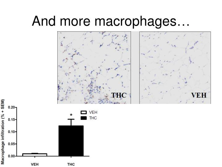 And more macrophages…