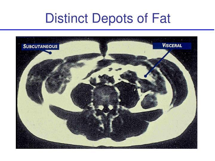 Distinct Depots of Fat