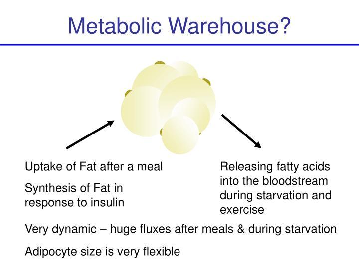 Metabolic Warehouse?