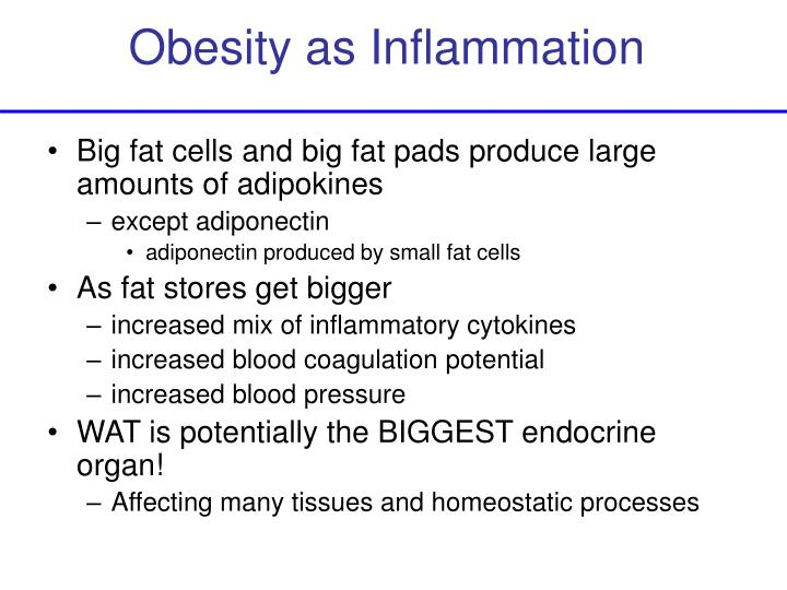 Obesity as Inflammation