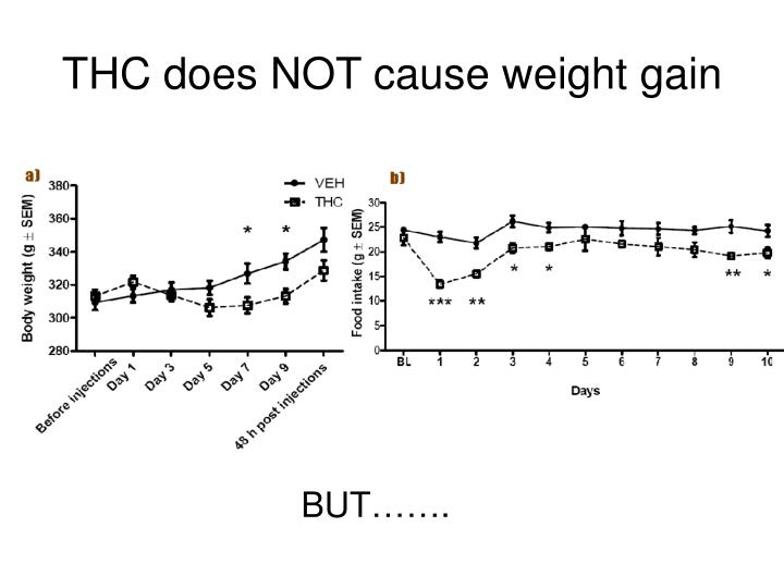 THC does NOT cause weight gain