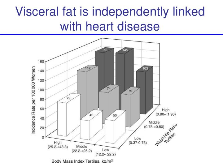 Visceral fat is independently linked with heart disease