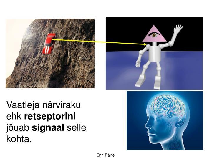 Vaatleja närviraku ehk
