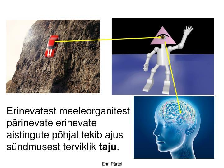 Erinevatest meeleorganitest pärinevate erinevate aistingute põhjal tekib ajus sündmusest terviklik