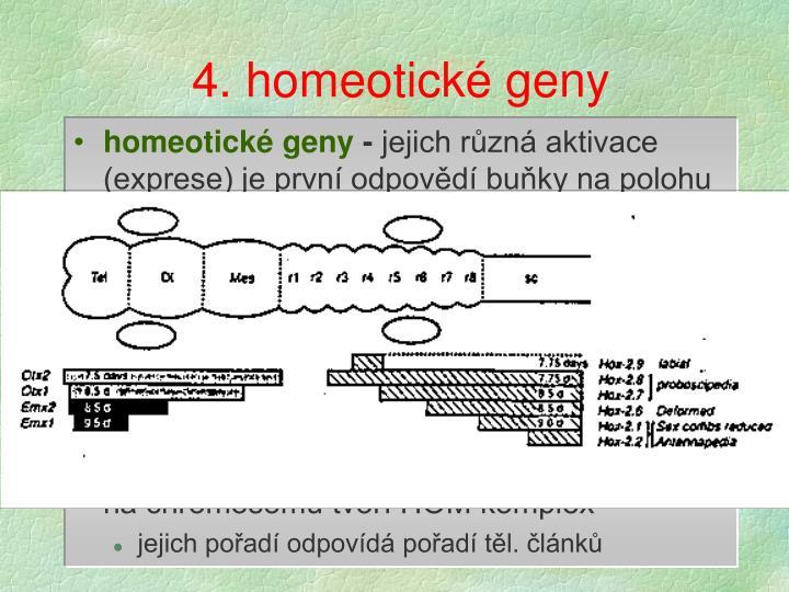 4. homeotické geny