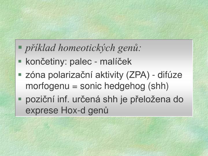 příklad homeotických genů:
