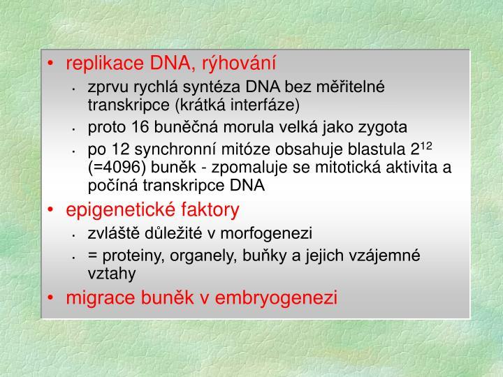 replikace DNA, rýhování