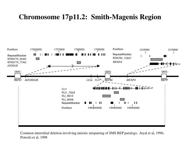 Chromosome 17p11.2:  Smith-Magenis Region