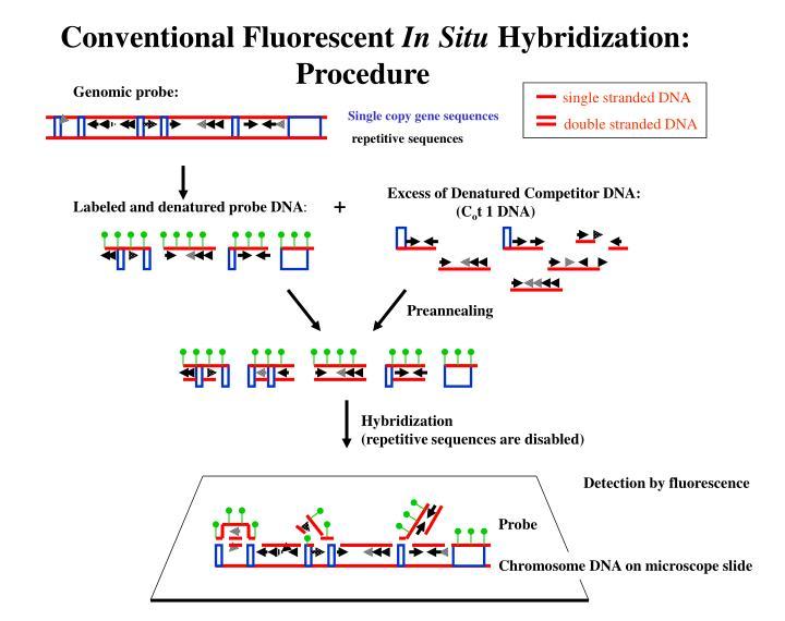 Conventional Fluorescent