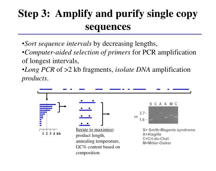 Step 3:  Amplify and purify single copy sequences