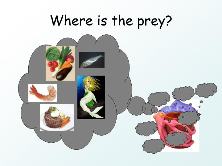Where is the prey?