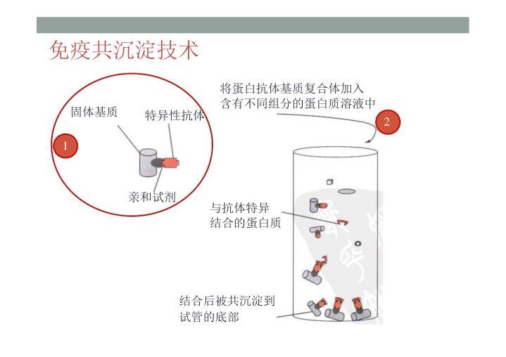 免疫共沉淀技术