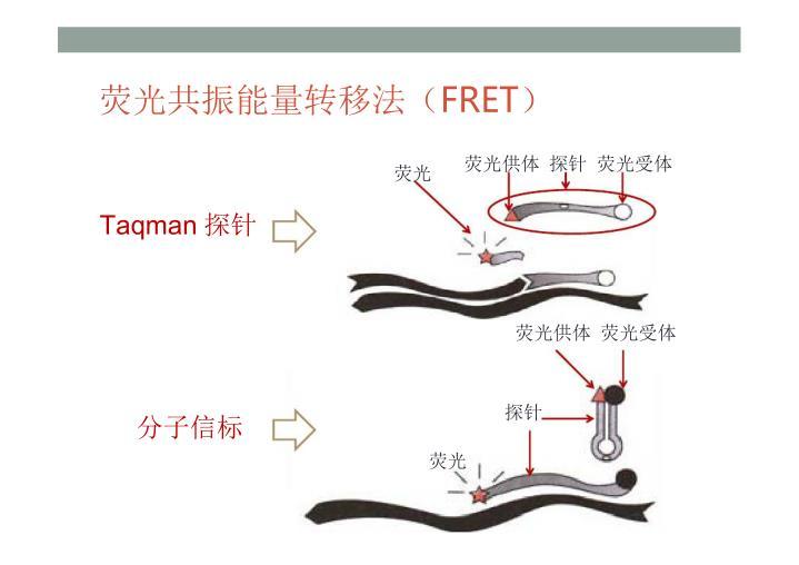 荧光共振能量转移法(FRET)