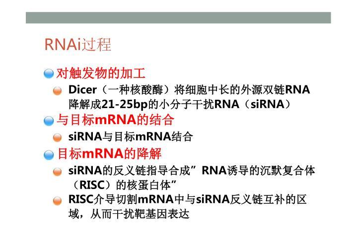 RNAi过程