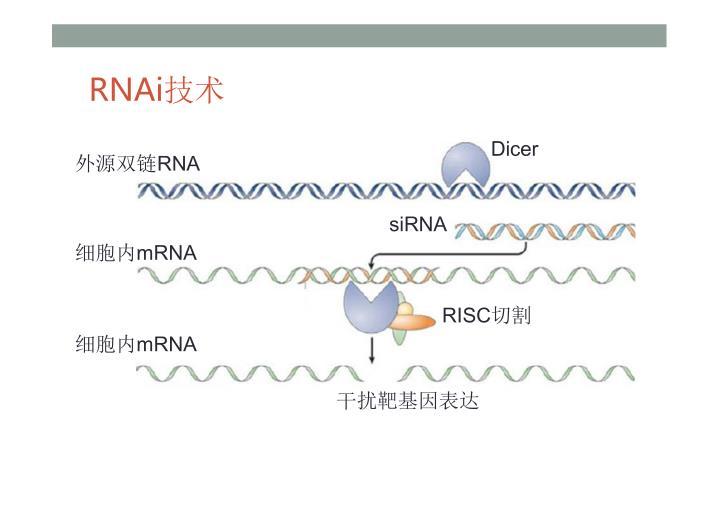 RNAi技术