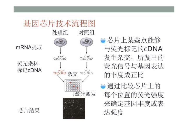 基因芯片技术流程图