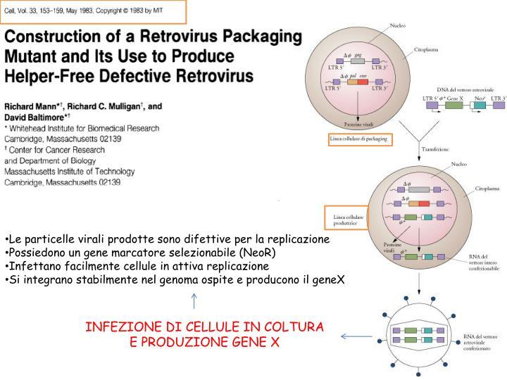 Le particelle virali prodotte sono difettive per la replicazione