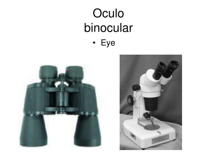Oculo