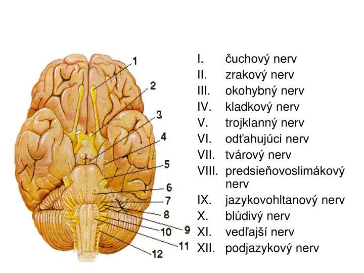 čuchový nerv
