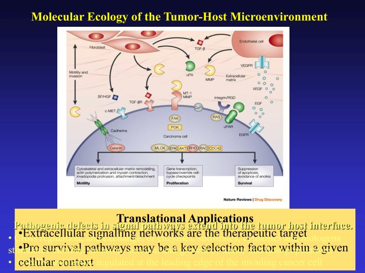 Molecular Ecology of the Tumor-Host Microenvironment