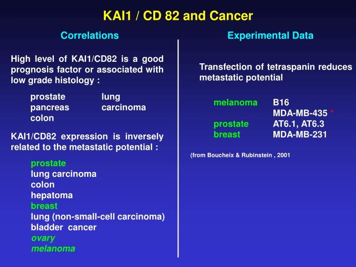 KAI1 / CD 82 and Cancer