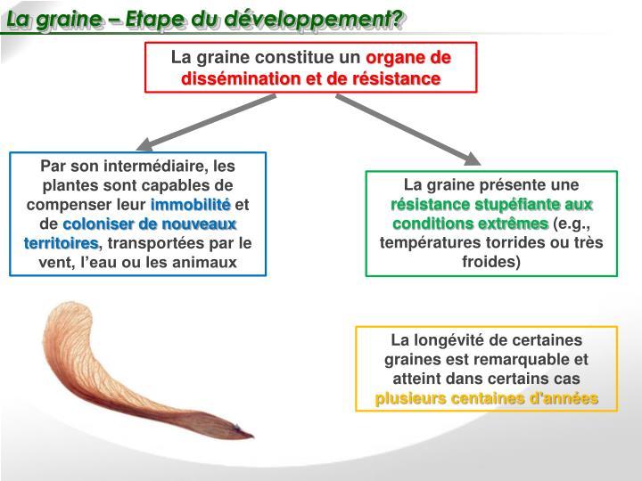 La graine – Etape du développement?