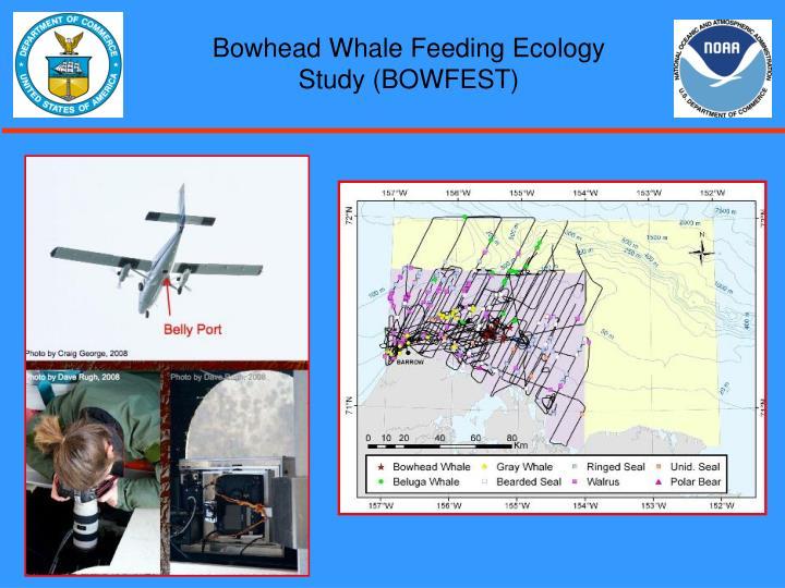 Bowhead Whale Feeding Ecology Study (BOWFEST)