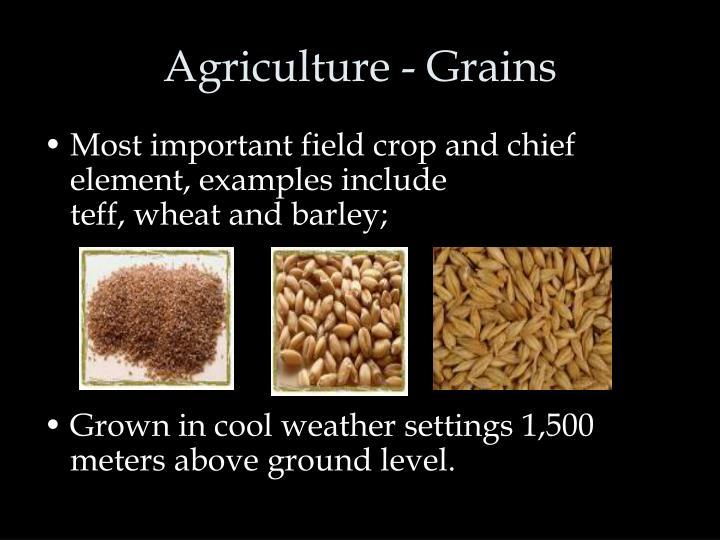 Agriculture - Grains