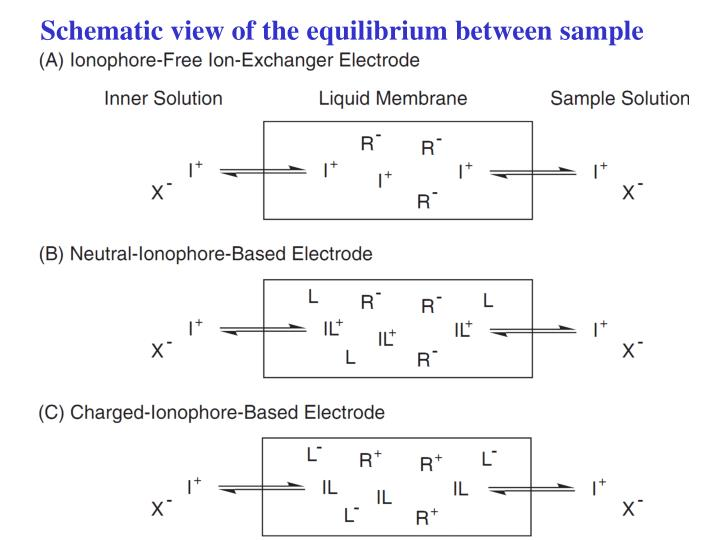 Schematic view of the equilibrium between sample