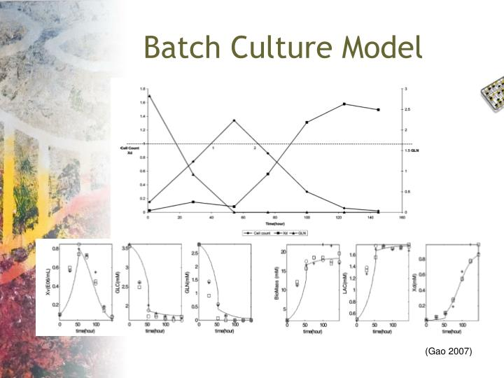 Batch Culture Model