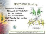 nfat5 dna binding