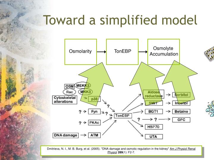 Toward a simplified model