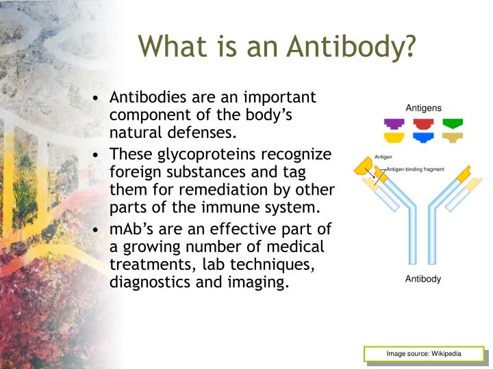 What is an antibody