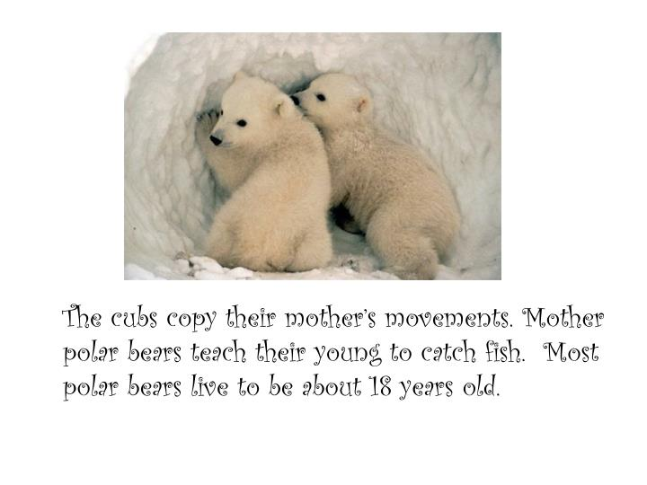 The cubs copy their mother's movements. Mother polar bears teach their young to catch fish.  Most polar bears live to be about 18 years old.