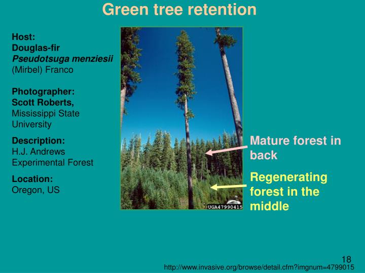Green tree retention